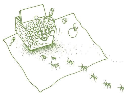 ants invade